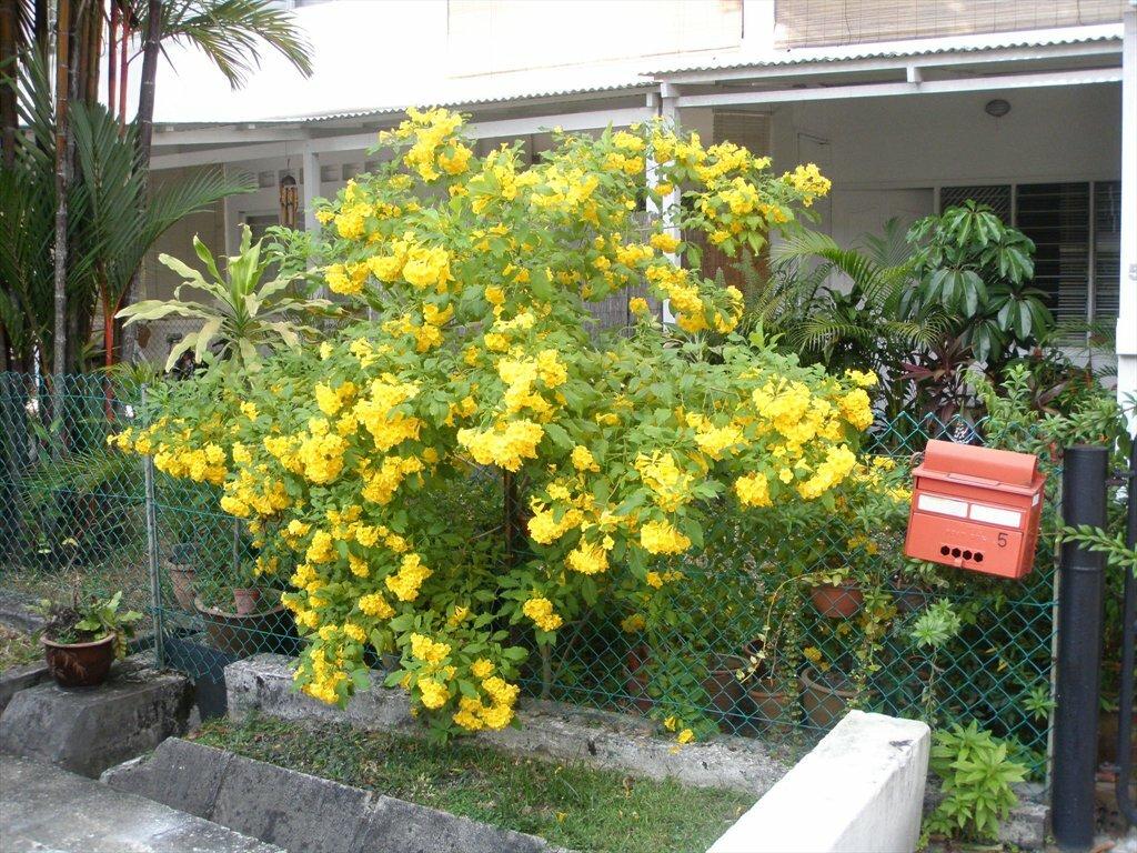 Chip Bee Gardens #44266523