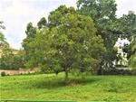*** BEAUTIFUL TANGLIN CHATSWORTH FLAT LAND FOR REBUILT*** PRIME LOCALITY