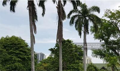 For Sale - Squarish & Flat Land! Great View! Subdivision Potential! !! (顶级优质洋房)(9295-8888 祝您祝我, 发发发发)