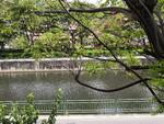 Lakeside Grove