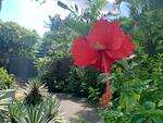 Land for Rebuild Only Almost 20 metre Frontage Squarish Bungalow Land Call David 81394988 Now!