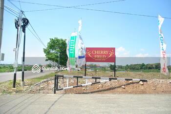 Cherry Field