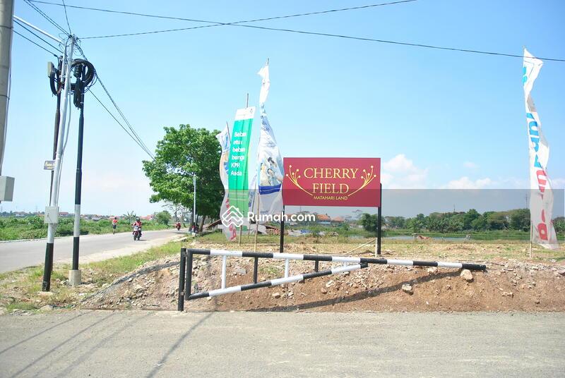 Cherry Field #0